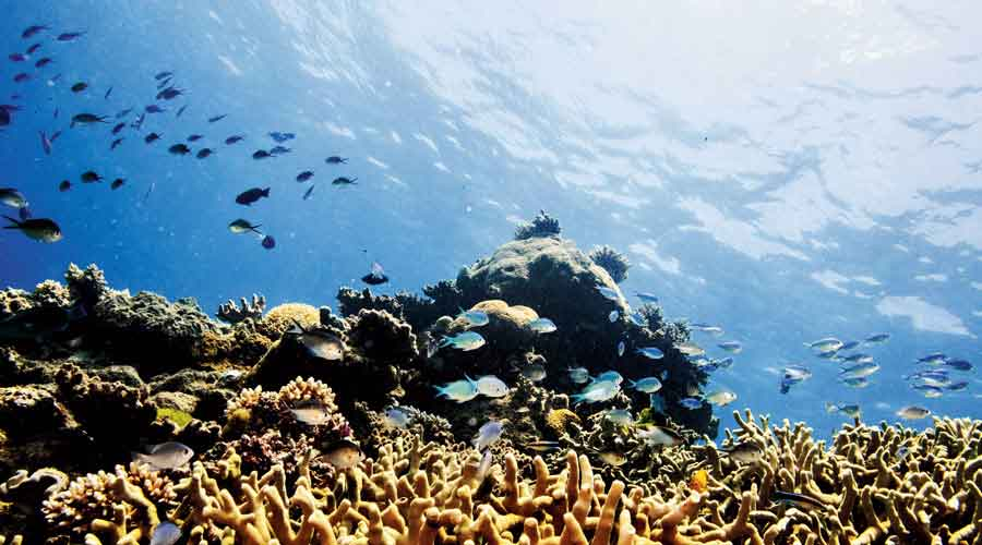 Norway moved amendments that put the reef back on the committee's agenda at its annual meeting next June.