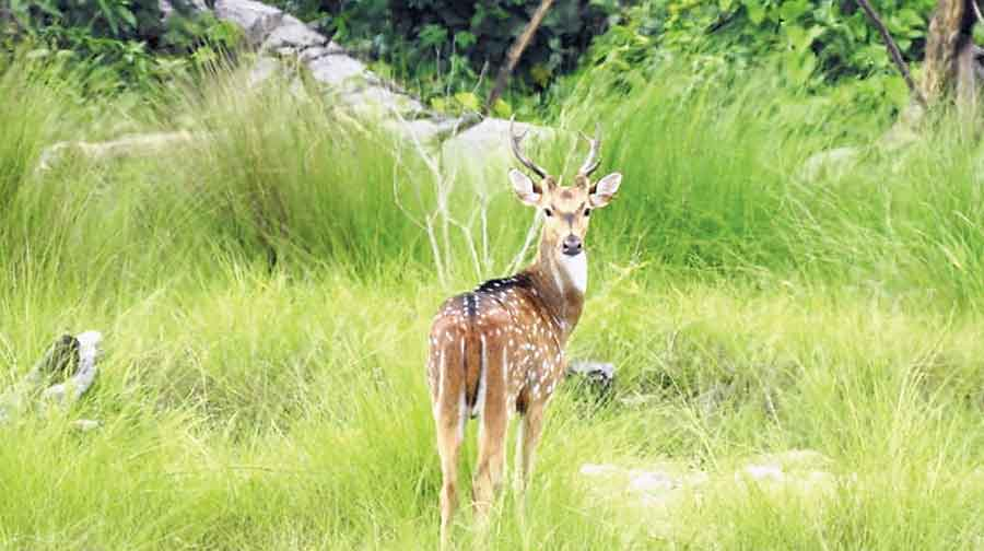 Raimona Reserve Forest In Assam Becomes The State'S Sixth National Park -  Telegraph India