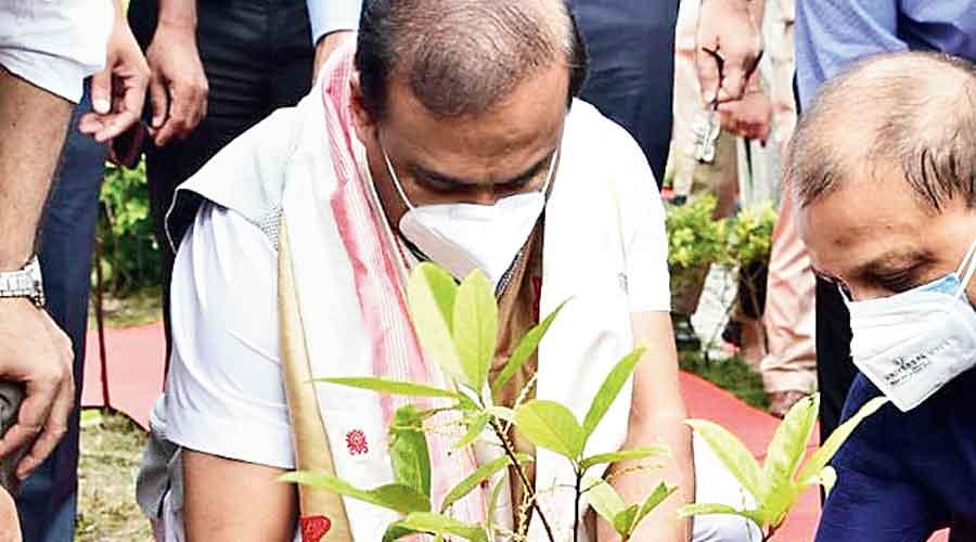 Chief minister Himanta Biswa Sarma plants a sapling