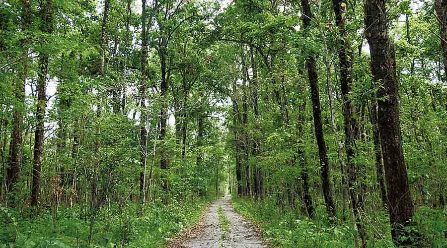 Spread over 422sqkm in Kokrajhar district, Raimona National Park straddles the northern part of the notified Ripu reserve forest, which forms the westernmost buffer to the Manas Tiger Reserve.