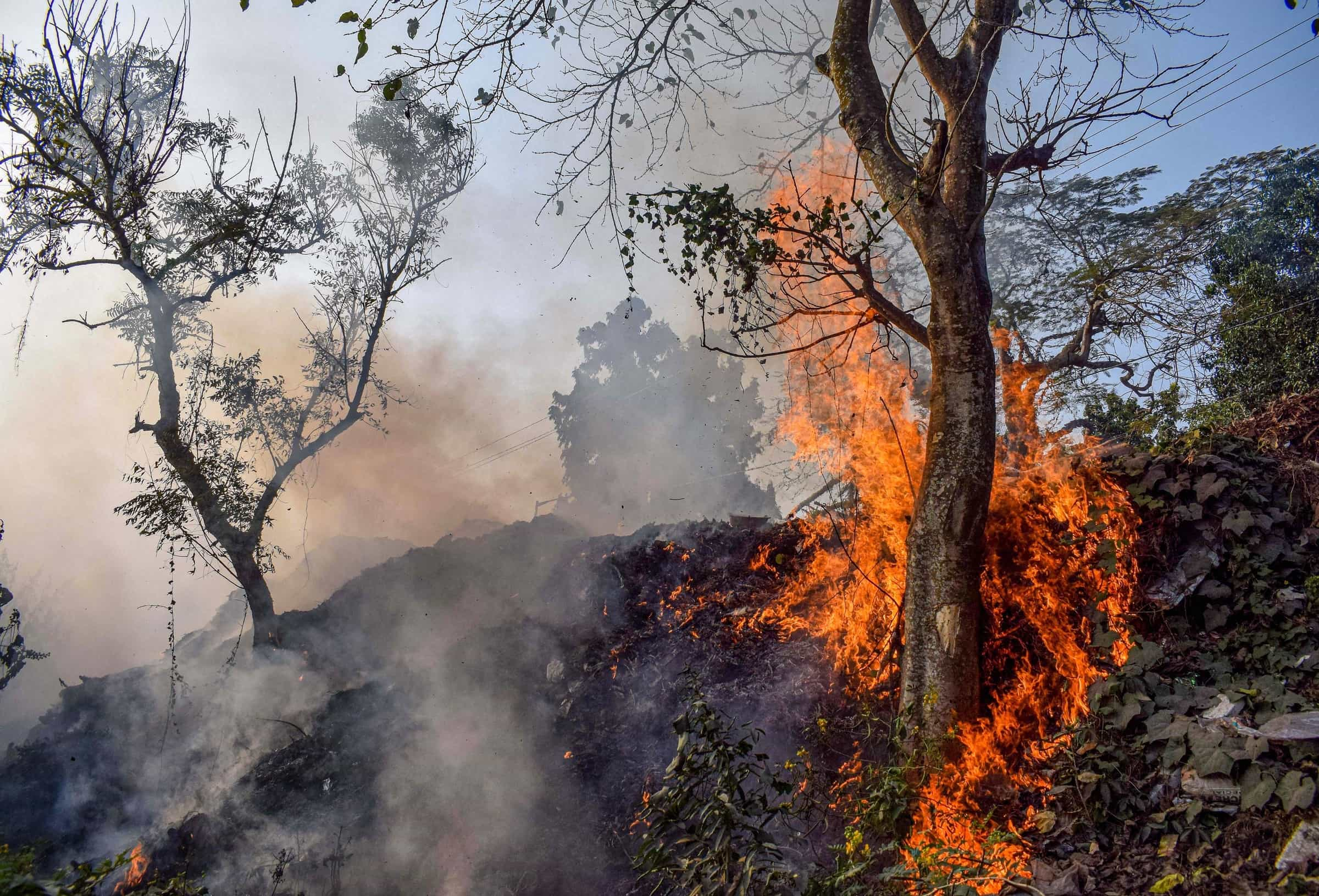 A tree in Nadia catches fire on Saturday.