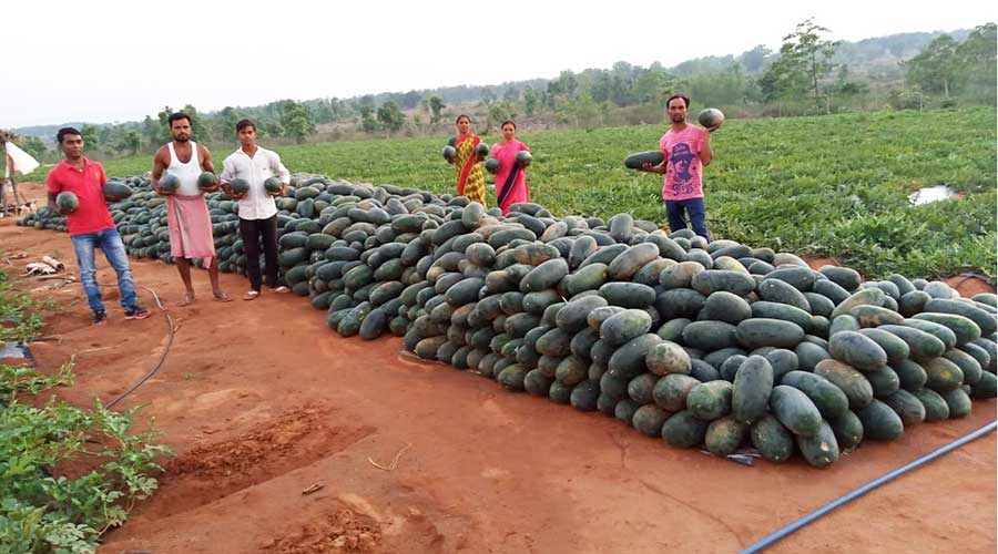 Farmers wait for buyers for their watermelon harvest at their farmlands in Gomia Block of Bokaro.