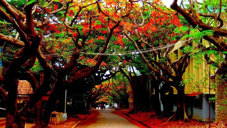 Inside IIS Bangalore Campus
