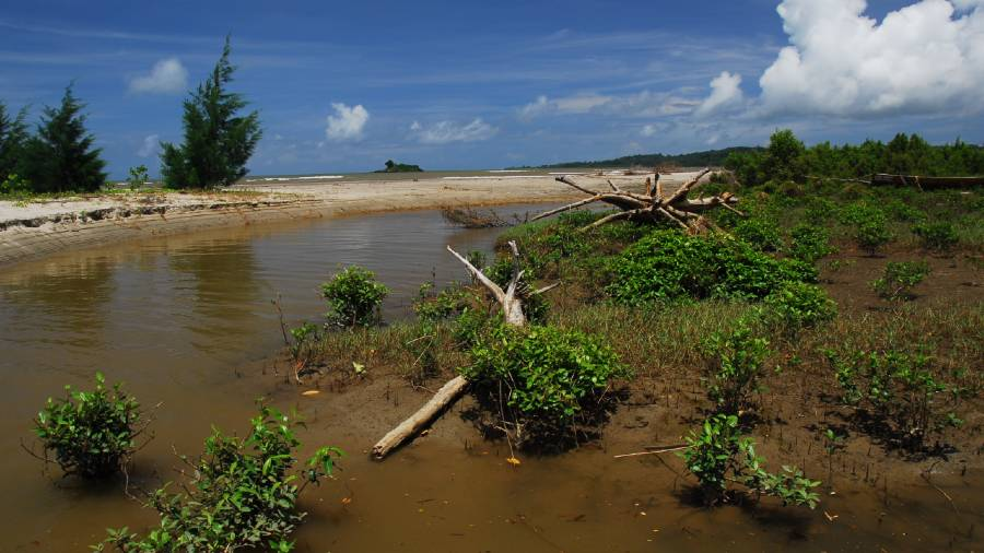 In Talbagan, mangroves have begun to regenerate alongside the carcasses of those that perished after the 2004 tsunami