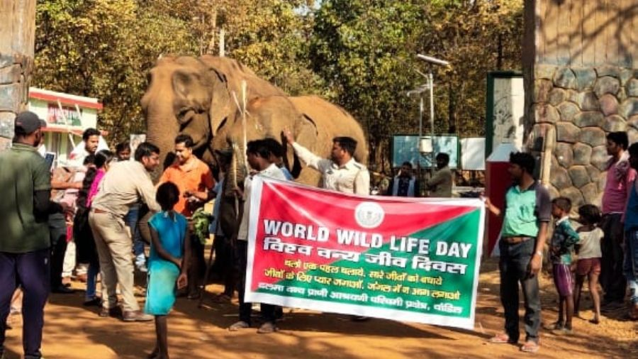 People celebrate Wildlife Day at the Dalma sanctuary in Jamshedpur on Wednesday.