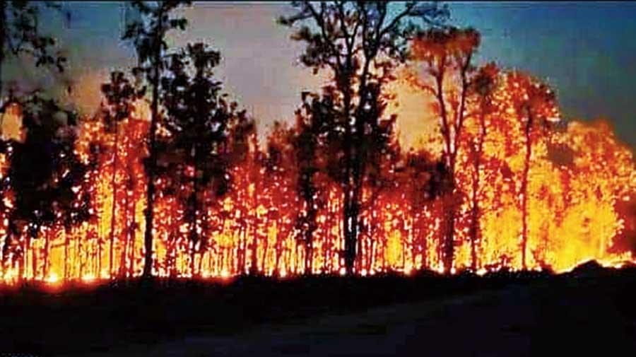 Fire rages at Similipal sanctuary