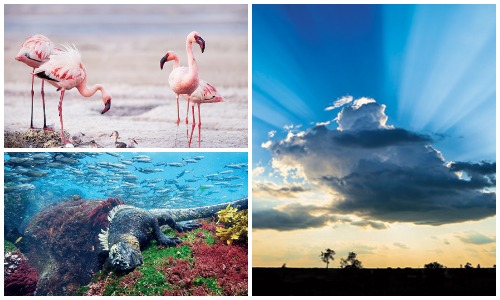Moments from Sony BBC Earth's A Perfect Planet
