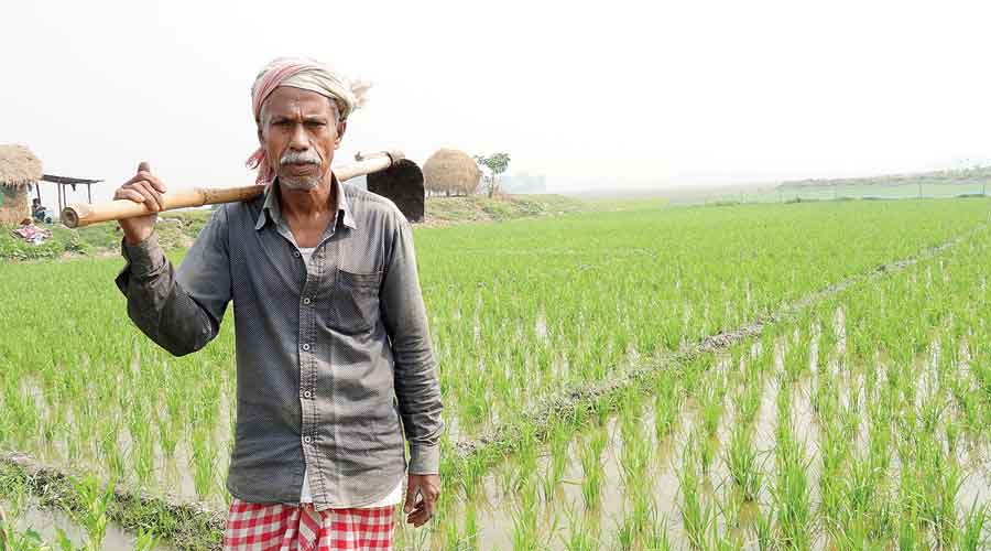 Assam: Story of rice and fall