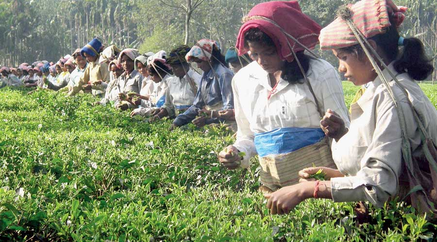 A trade union leader in the Dooars said the curb also halved the income of tea workers.