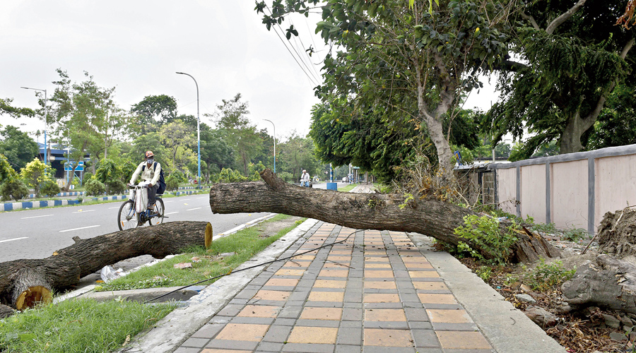 A tree that was leaning over a pavement in the Hastings area was chopped off on Monday.