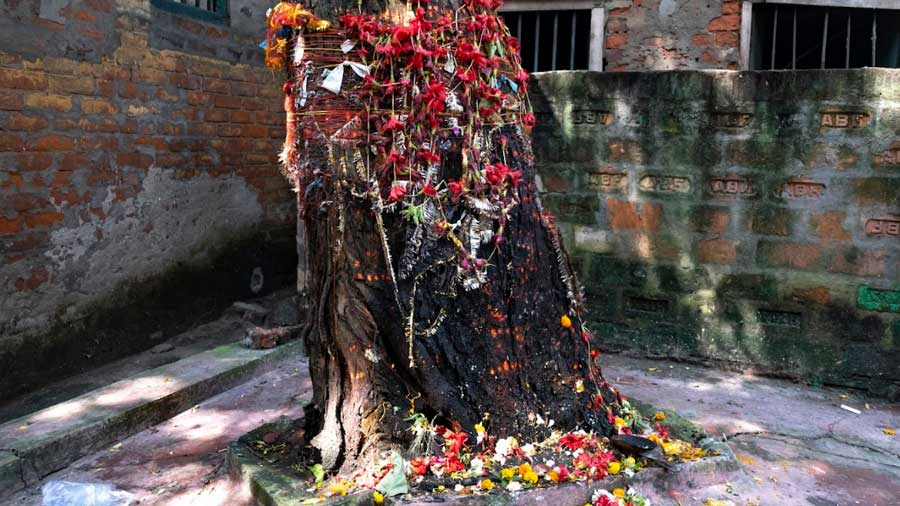 The neem tree found in the shashan behind the temple that has stood aloft for centuries