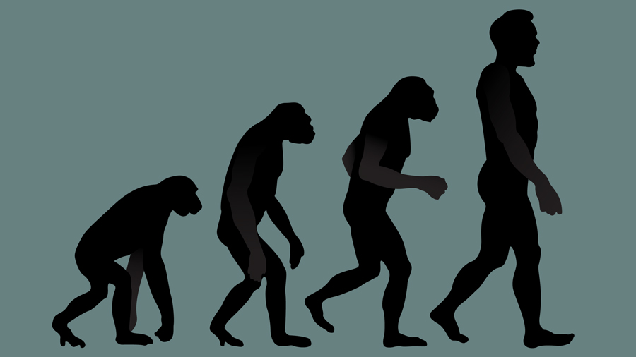 Darwin's dead: Evolution out of CBSE biology syllabus