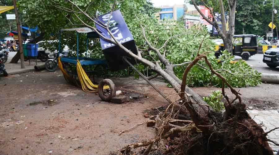 An uprooted tree at Sakchi in Jamshedpur on Monday.