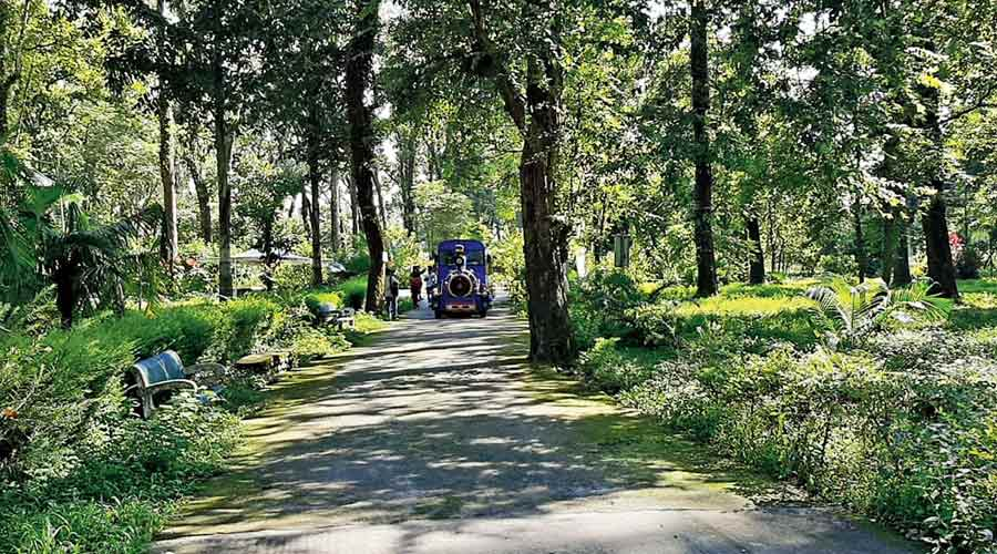 Dooars forests now open to tourists