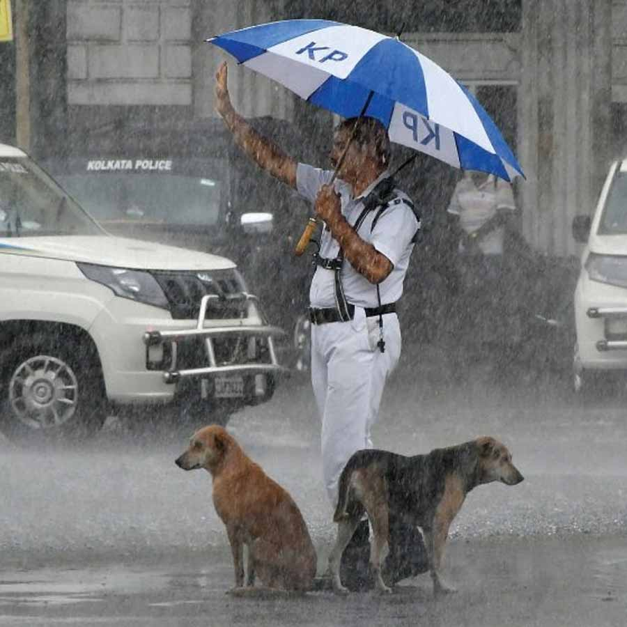 HELP AT HAND: Twitter user Md Rabiul Islam posted this photograph of a traffic policeman keeping vigil through a downpour, offering some protection from the rain also to two four-legged residents, on Saturday, September 18. The week concluded with wet weather from early Saturday morning in Kolkata, prompting some to bemoan a missed Puja shopping spree and others to dig into khichudi, begun bhaja and omelette