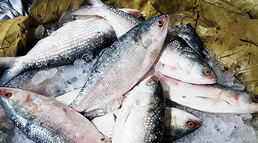 The ministry of commerce of that country on Thursday issued an order allowing 63 of its hilsa dealers to export 40 tonnes each to Bengal.