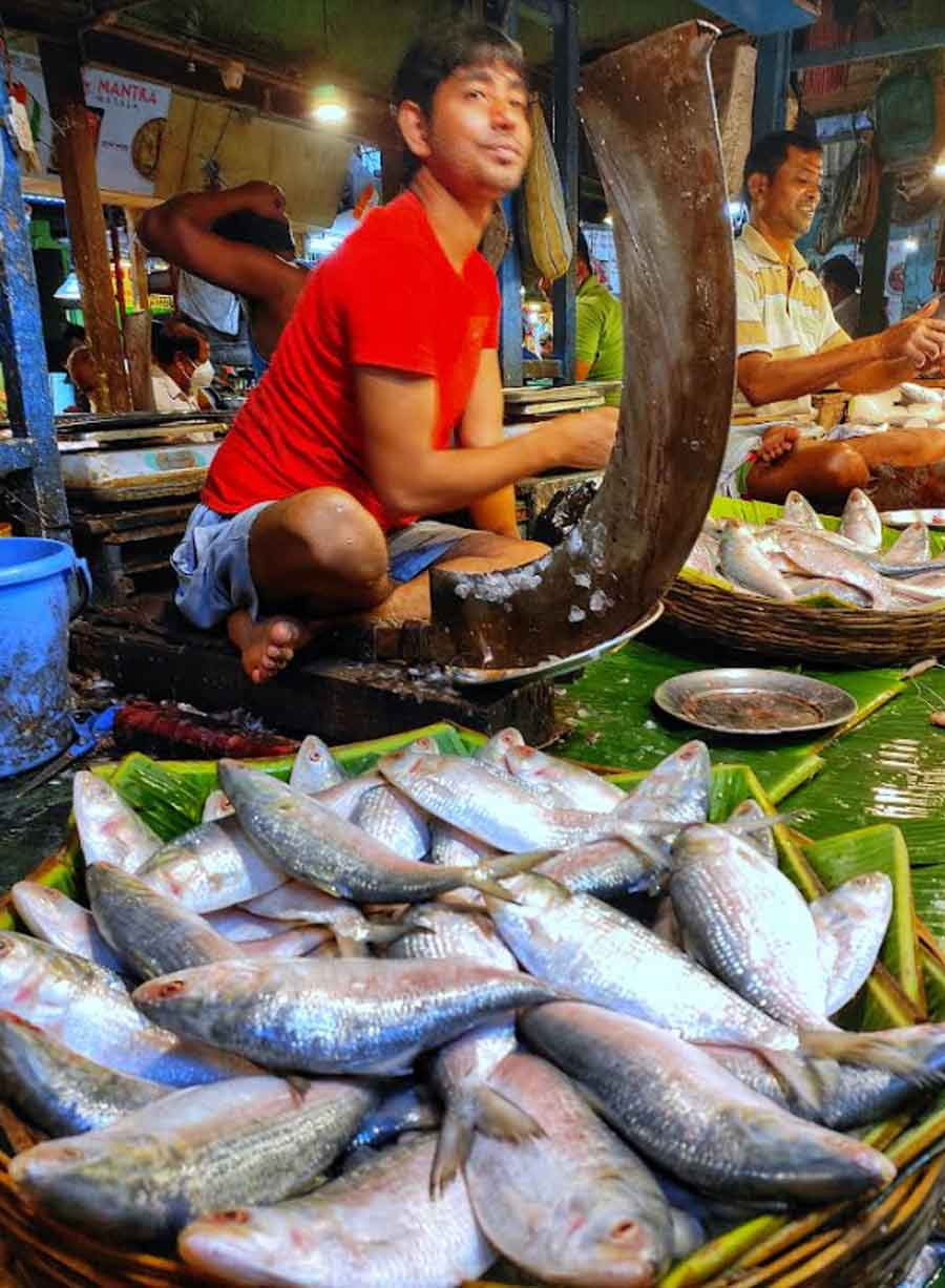 FISH FEAST: Hilsa from Bangladesh on sale at a market in north Kolkata on Friday, September 24. As an advance Durga Puja gift, Bengal's eastern neighbour has allowed its traders to export over 4,500 tonnes of hilsa to Bengal — by far the most the Bangladesh government has allowed in recent years