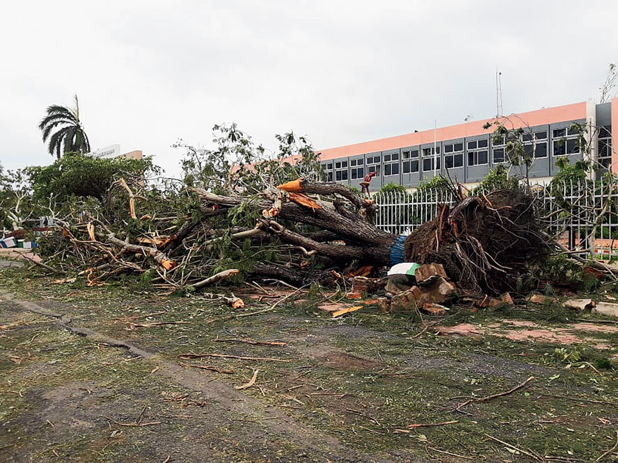 Trees uprooted in the cyclone lie on a road in Haldia.