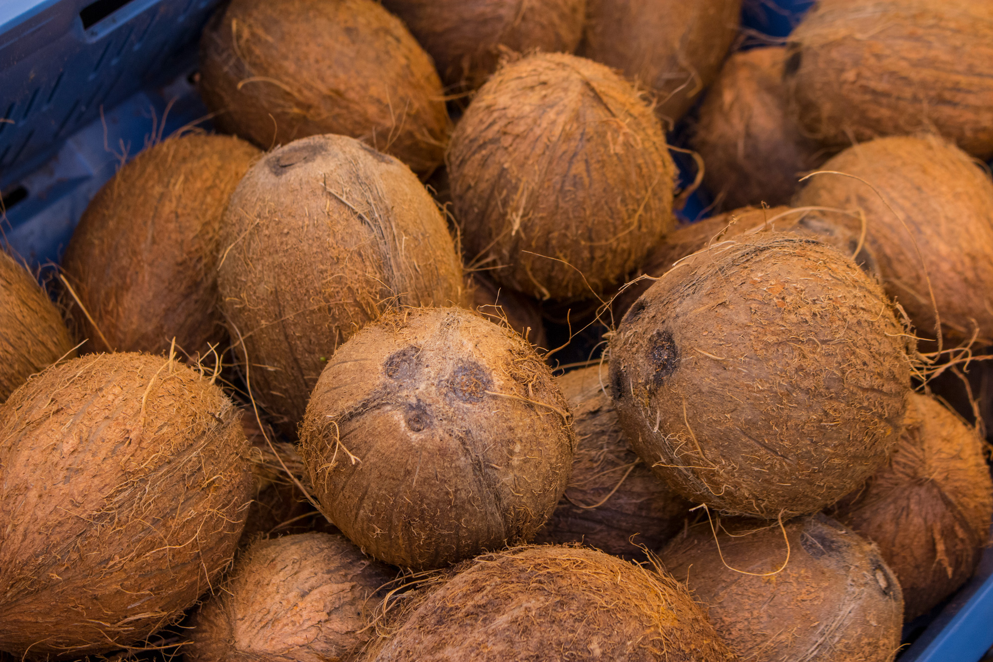 Coconuts that cost less than Rs 50 each in the market are selling for Rs 1,300 a piece online