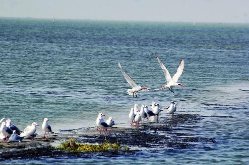 Artificial islands for migratory birds