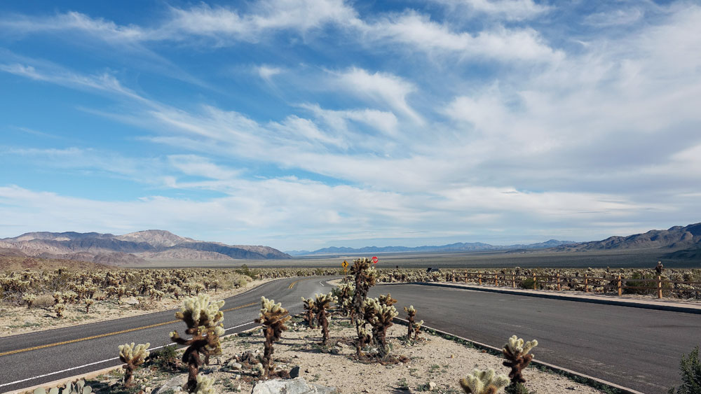 To many, the Joshua tree is the symbol of the Mojave Desert. Large dagger-like leaves in endlessly varying forms at this arid low desert offer visitors stunning vistas and rewarding hikes