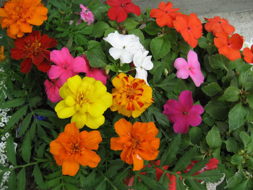 Seasonal May flowers in Dorothy Roberts' Madison home