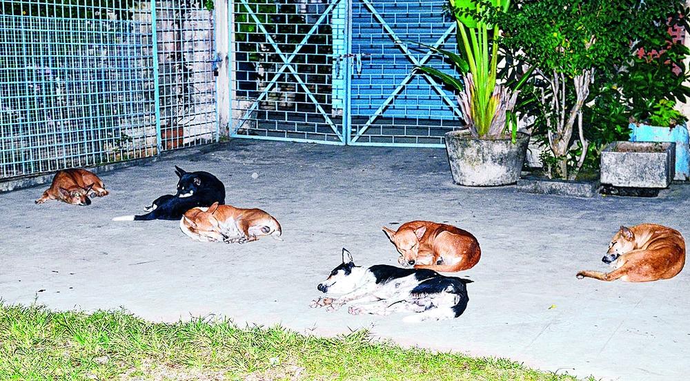 Maneka targets dog meat sale