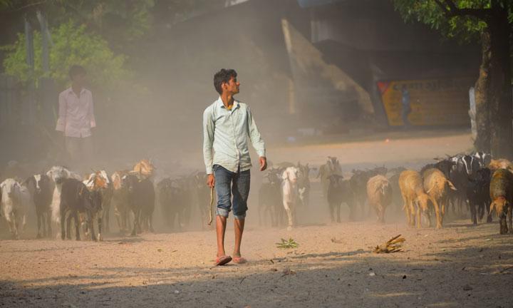 Road dust contains loose soil that has silica, aluminium and titanium