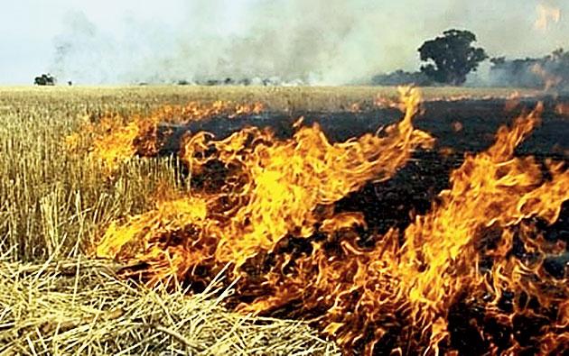 Crops set on fire in Balangir.