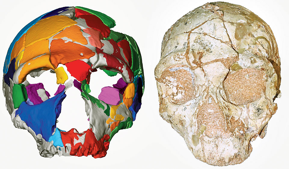 Cranium, over 170,000 years old (right), and its reconstruction (left)