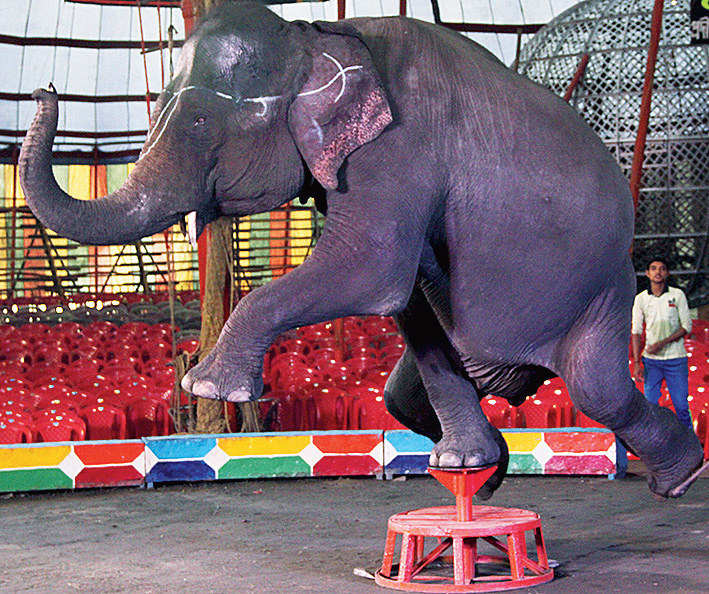 The Centre's proposal to ban all animal performances in circuses facilities is laudable, as the animals are forced to perform tricks that go against their natural instincts