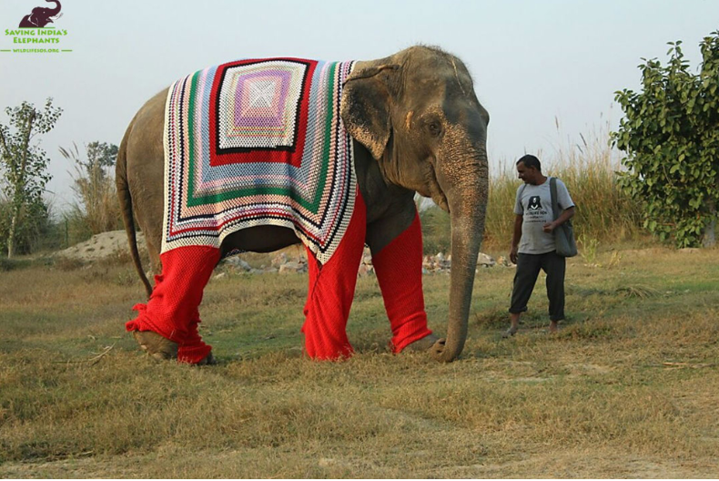 Women in a village near Mathura began producing the colourful, pyjama-like garments for elephants.