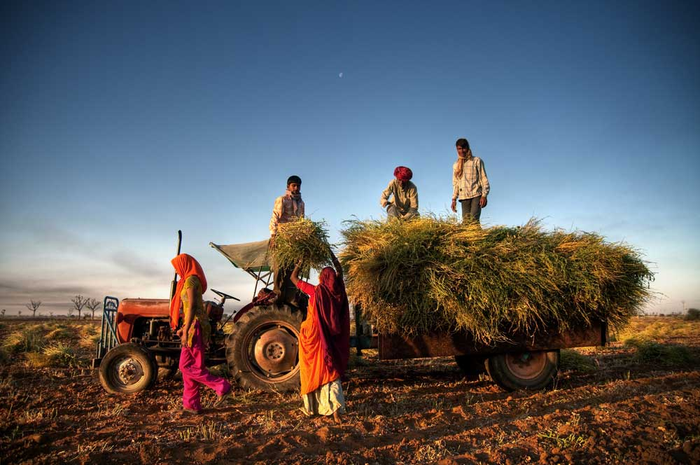 "P.C. Mohanan, former acting chairperson of the NSC, termed the ever-increasing demand for unskilled work under MGNREGA as a symptom of agricultural distress in rural India. ""There is already agricultural distress which would be pushing the people to depend on MGNREGA,"""