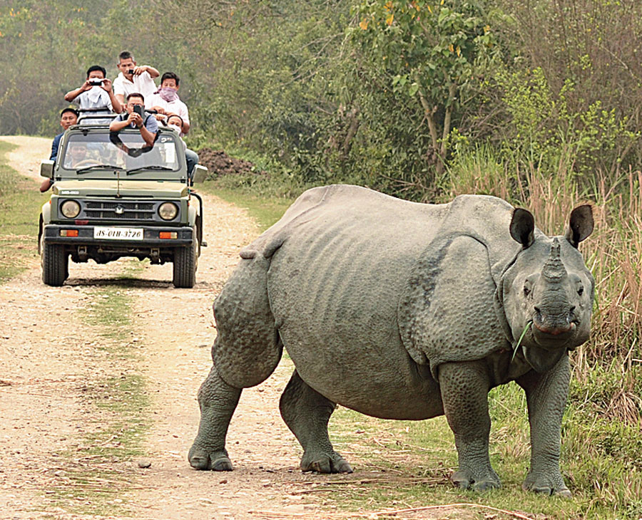 Tourists on jeep safari in Kaziranga