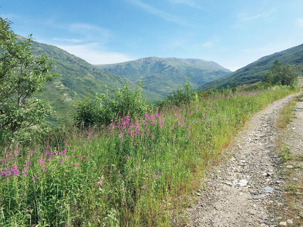Wild flowers colour the undulating valleys and the hillsides wear carpets of violet fireweed that springs to life during summer