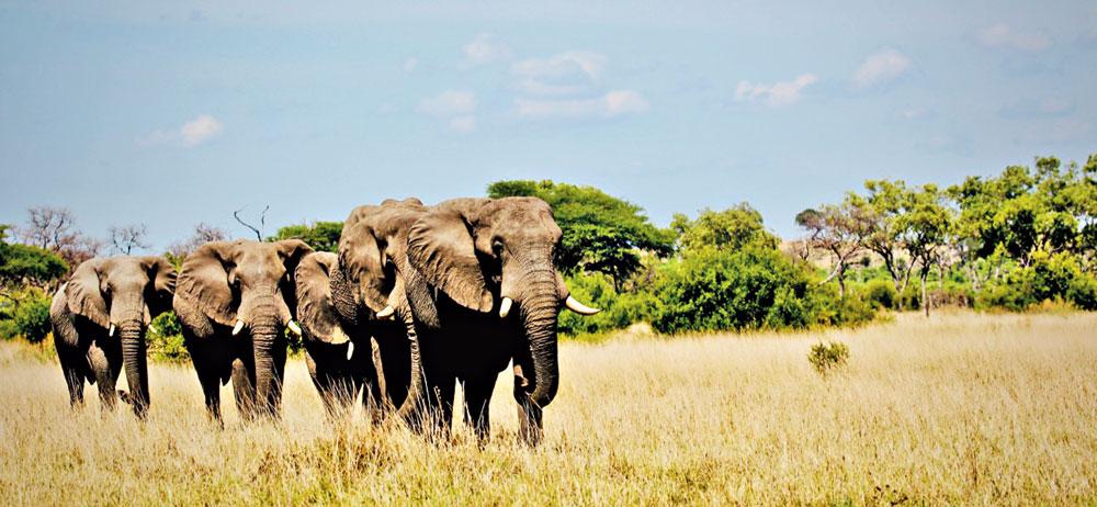 Botswana: The best kept African secret