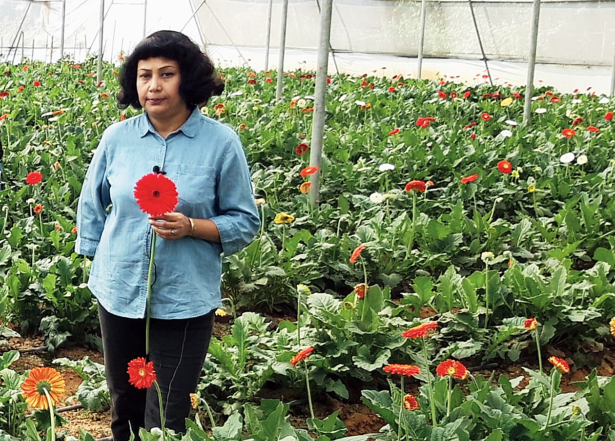 The mentor: Sudipta Ghosh at her gerbera farm at Khuntadih in Ghatshila, East Singhbhum.