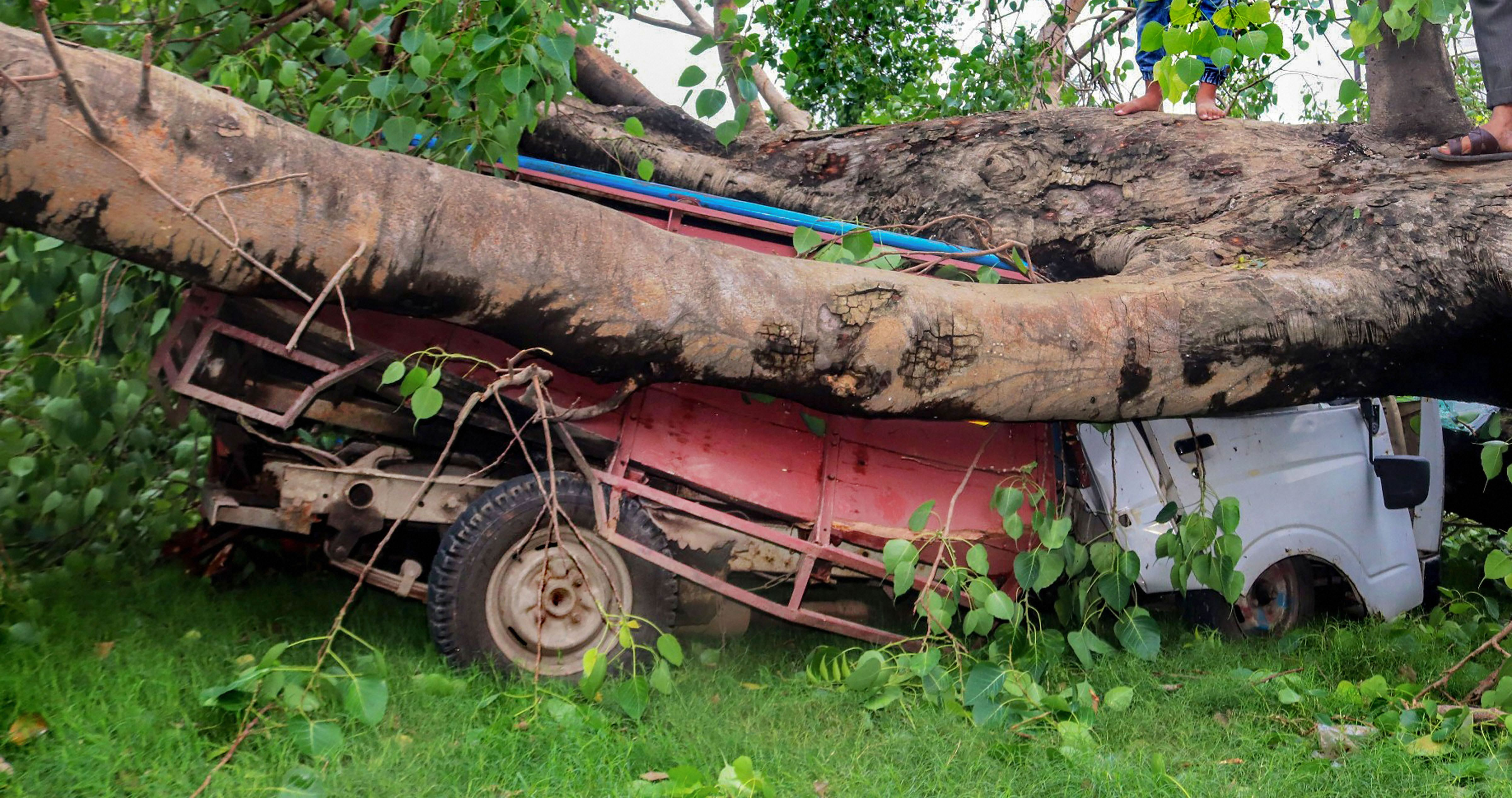 Mangled remains of a vehicle after a tree fell on it in the aftermath of Cyclone Amphan, in Burdwan district on Thursday, May 21, 2020.