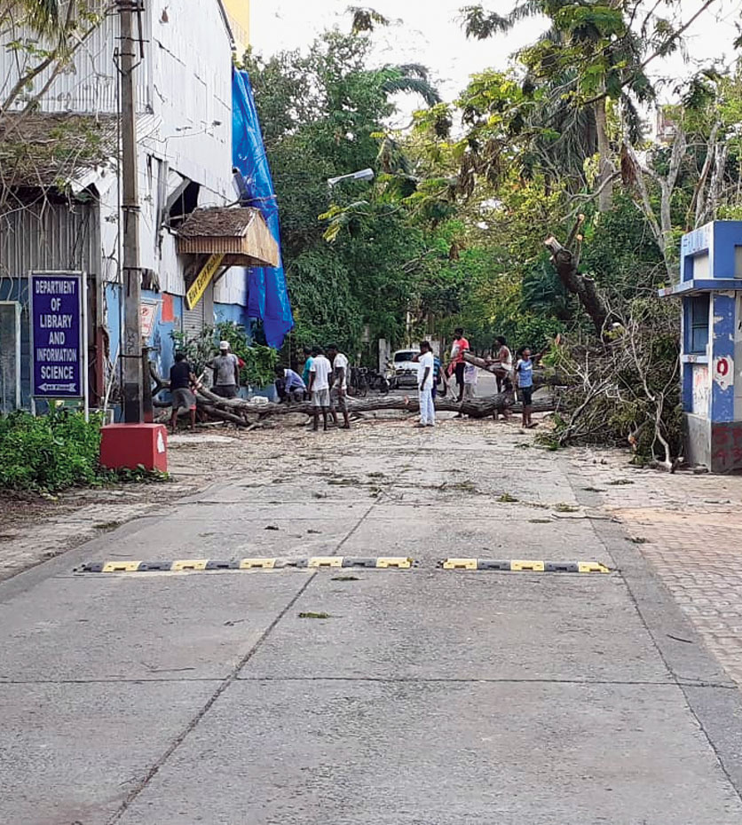 Tree cutters chop the branches and trunk of an uprooted tree on the Jadavpur University campus on Friday.
