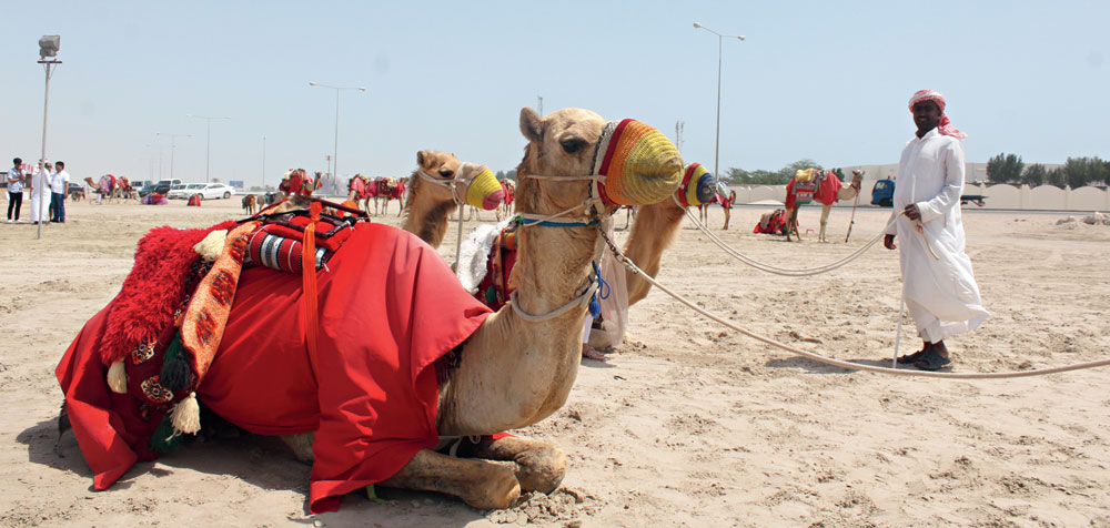 Before some dune bashing in an SUV, one can take a ride on the original ship of the desert