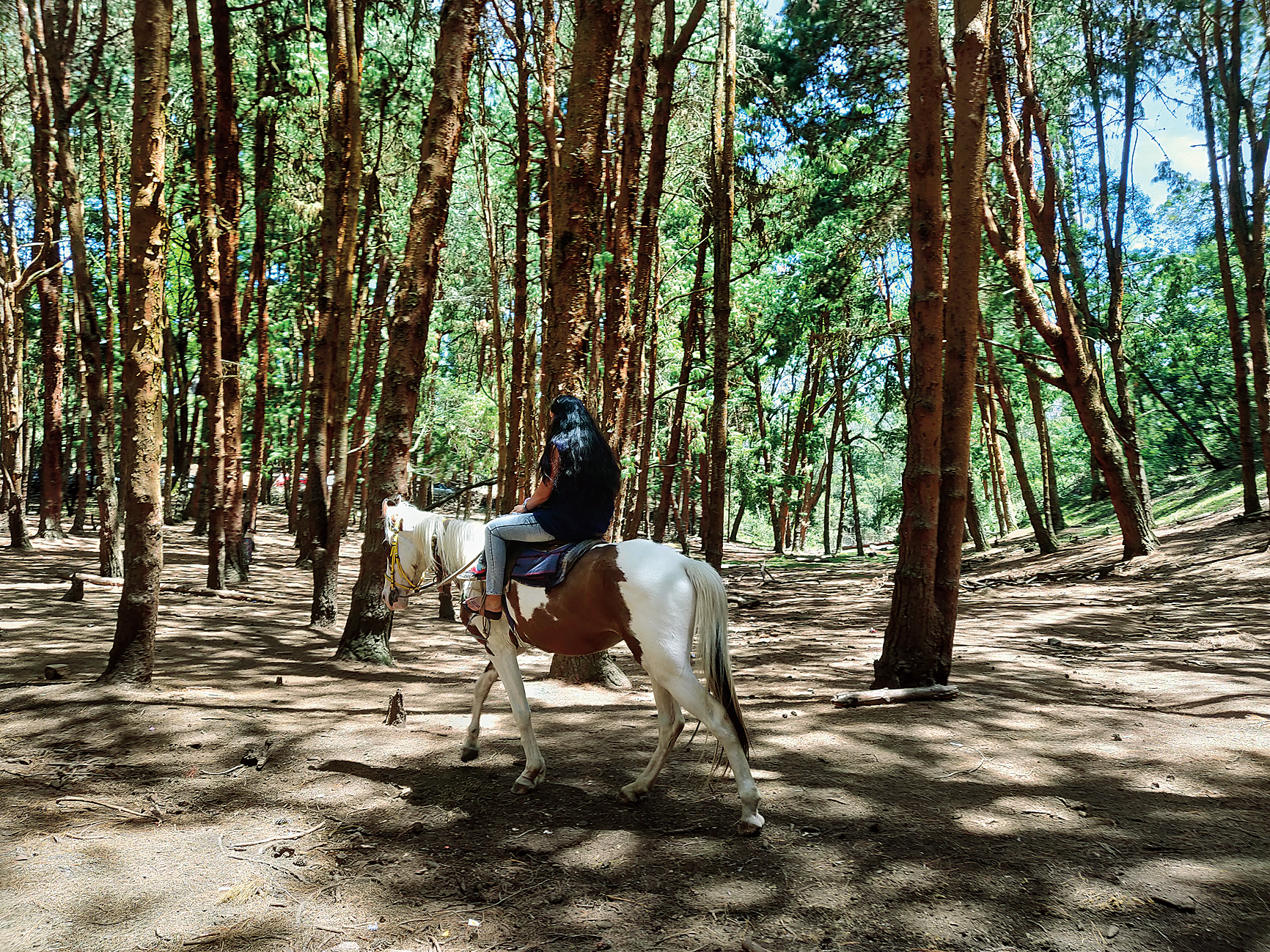 The pine forest near the solar observatory is a popular tourist destination. The plantations were started by H.D. Bryant in 1906 to grow timber. Today the place offers opportunities for horse-riding, photo shoots and other activities