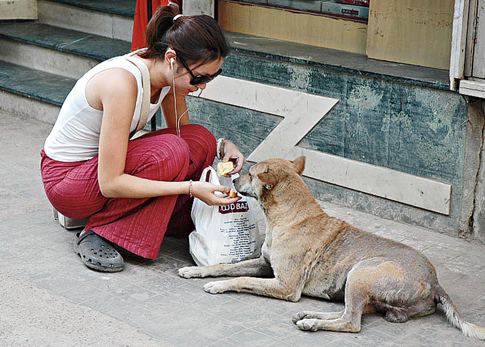 More and more people are adopting strays as pets
