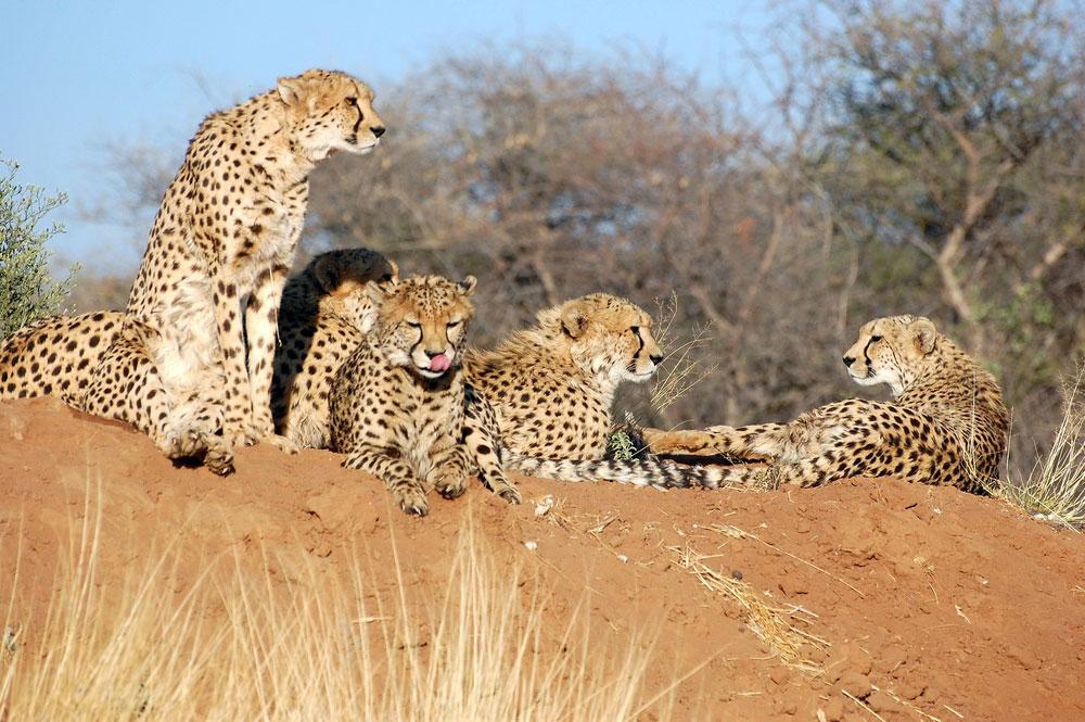 Namibia wind in cheetah sail