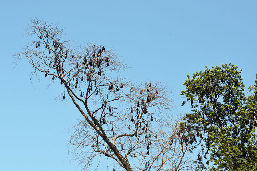 The trees at Paneri in Udalguri district.