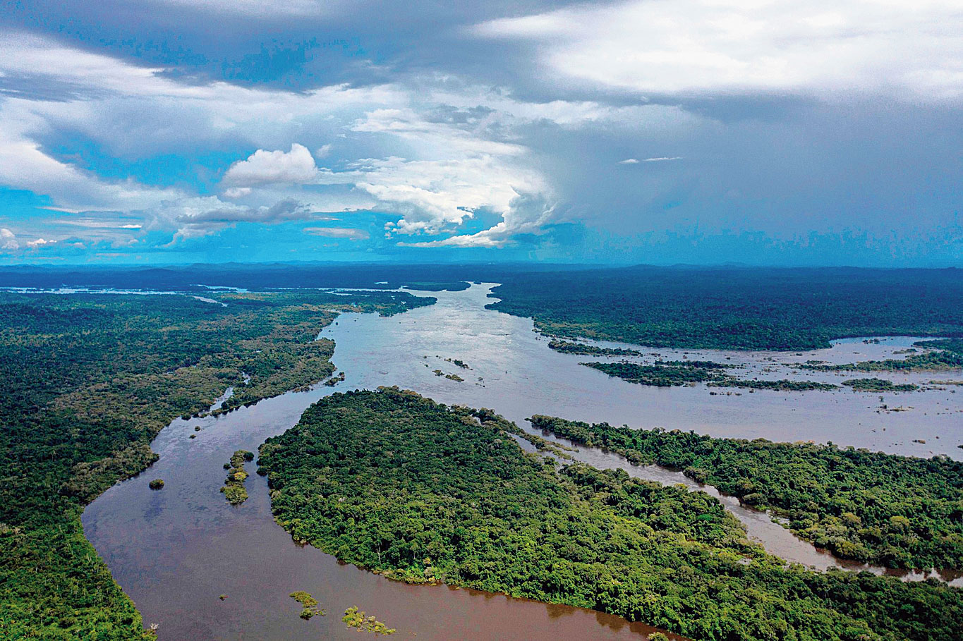 The Amazon rain forest in Para State, Brazil.