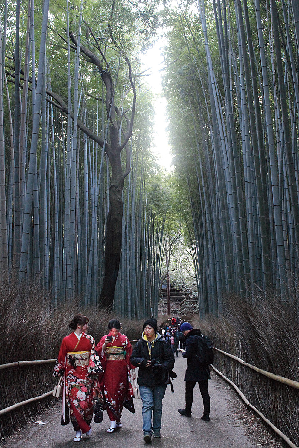 Sagano Bamboo Grove in Arashiyama district of Kyoto