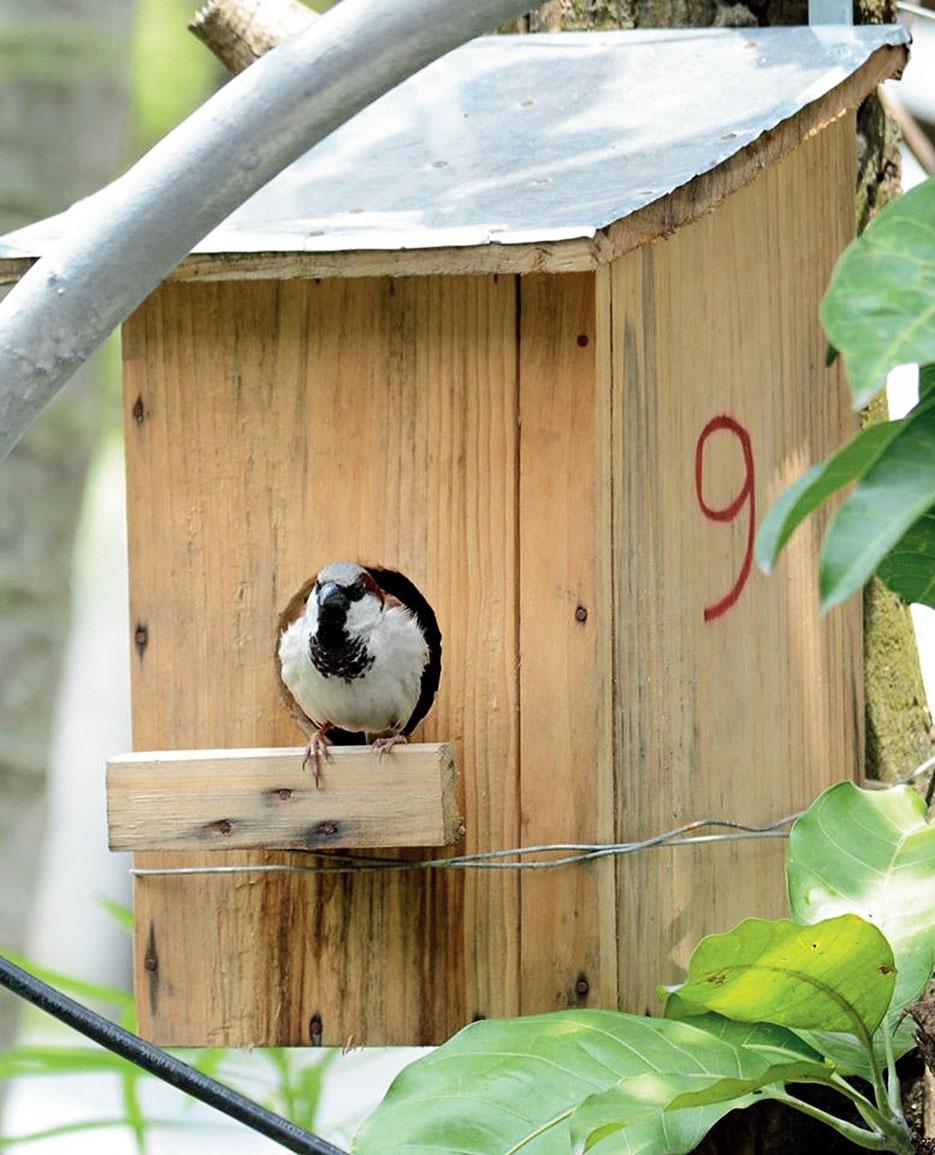 A bird box.