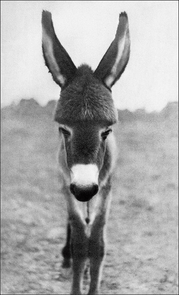 Rai's first picture was that of a baby donkey