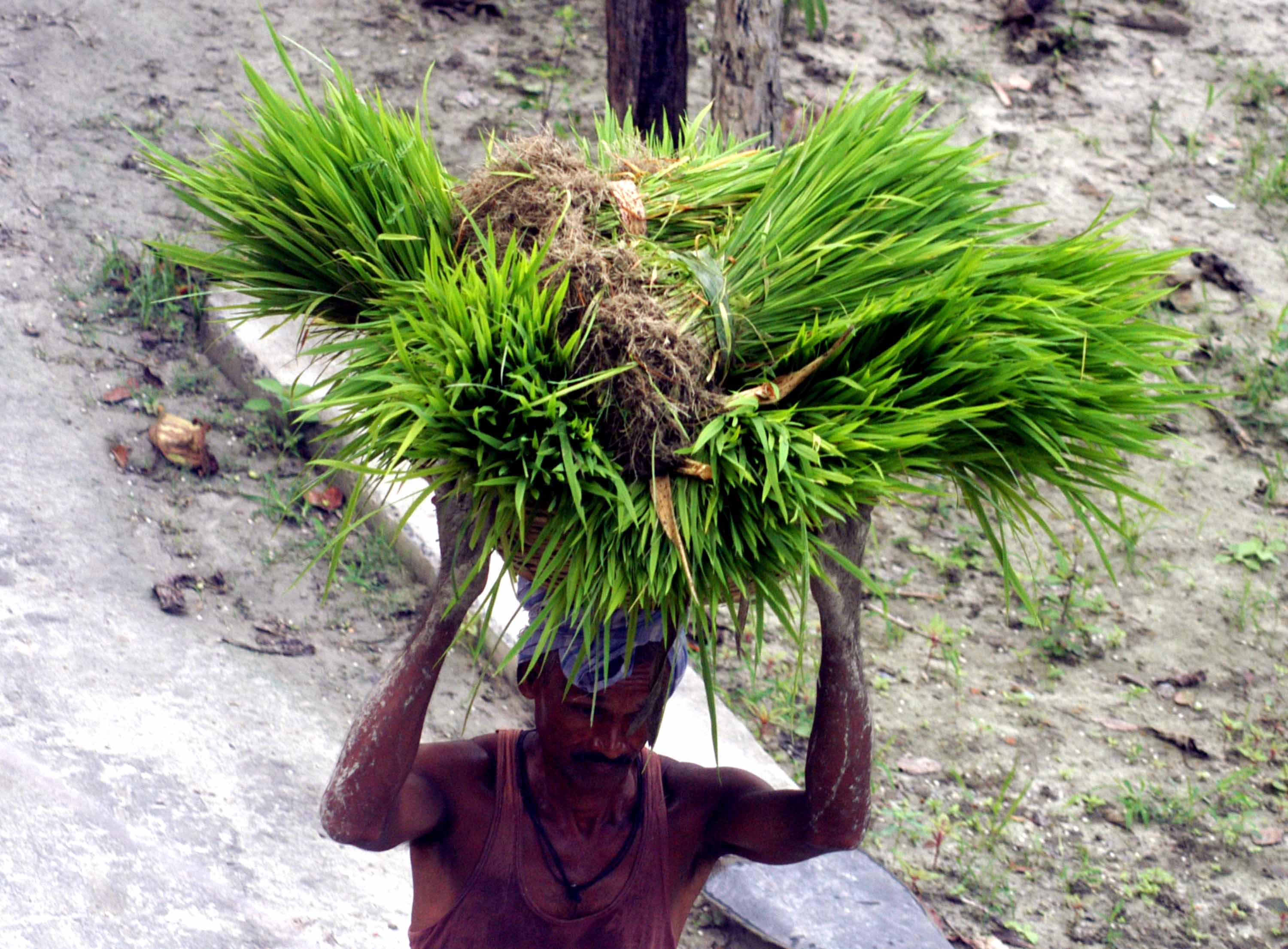 No Azaadi for Dalit agricultural labourers
