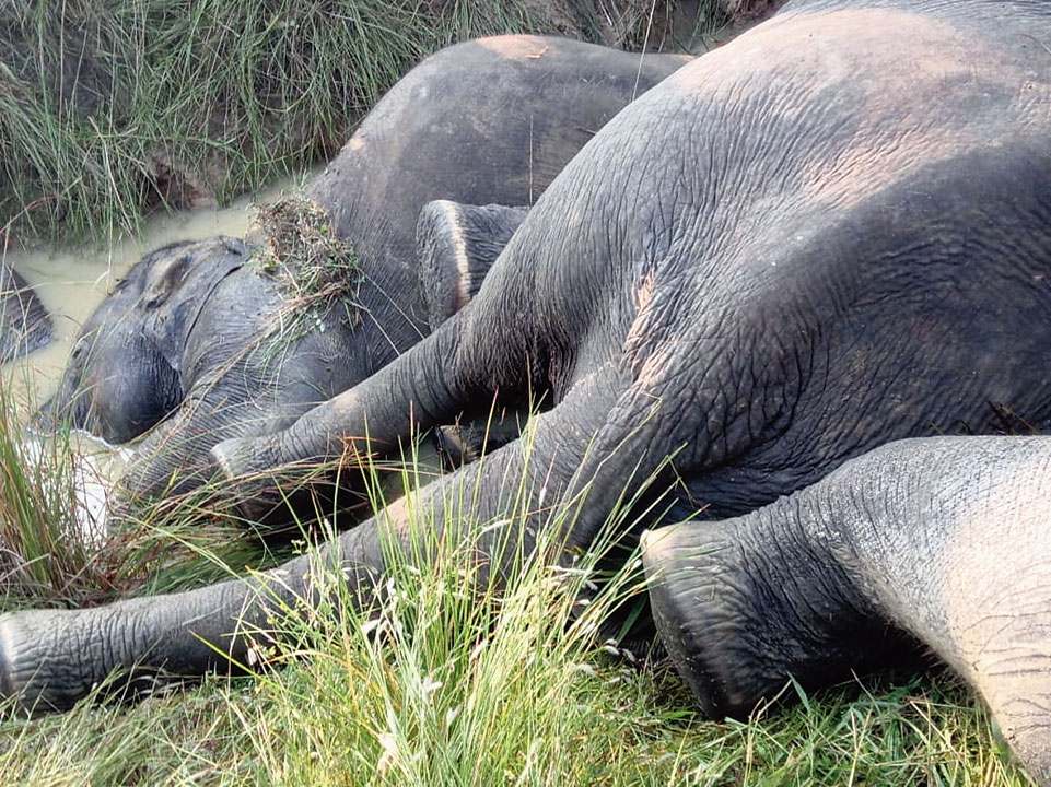 The jumbo carcasses in a water channel near Kamalanga village in Dhenkanal.
